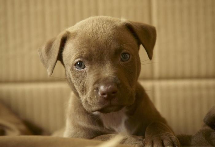 img3_puppyinabox